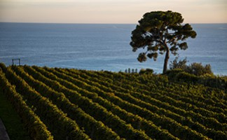 The wines of the Selvadolce Estate, Bordighera