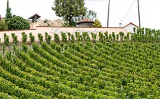 The Sancerre and Pouilly Vineyards