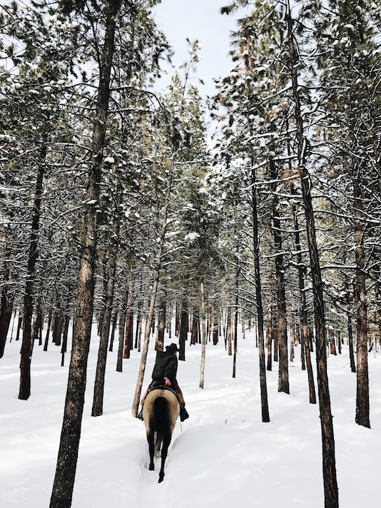 Horseback Riding in the Snow, Rocky Mountains, Colorado