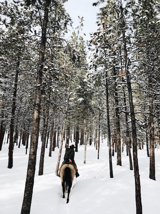 Balade à cheval dans la neige, Montagnes Rocheuses, Colorado