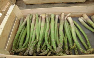 The Magescq Cooperative's asparagus
