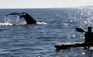 Aller aux baleines