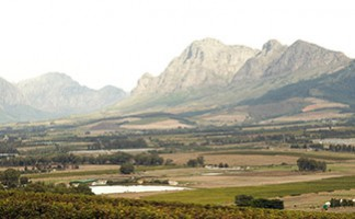 Winelands or love of the vine
