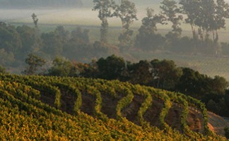 Harlan Estate Vineyards