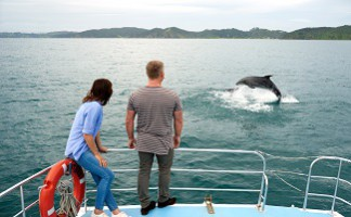 Travel the coast with the dolphins, Bay of Islands