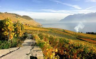 Lavaux vineyards