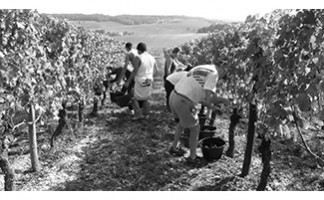 Tasting sessions at the Domaine du Bois de Simon, Laplume